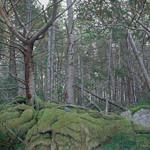 Oil Painting of a Forest setting with green moss in Canada